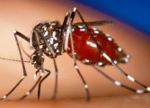 Alarm as 'super malaria' spreads in South East Asia