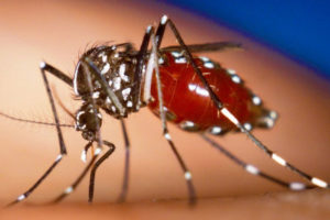 Jamaica Records Six Suspected Dengue-Related Deaths