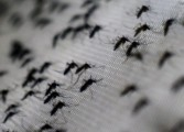 Ministry issues Zika Virus update