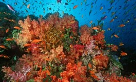 Illegal coral use prohibited with fine of up to $5,000