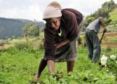 Government embarks on agricultural transformation project
