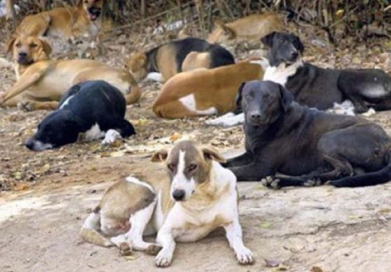 Castries Mayor vows to rid City of stray dogs