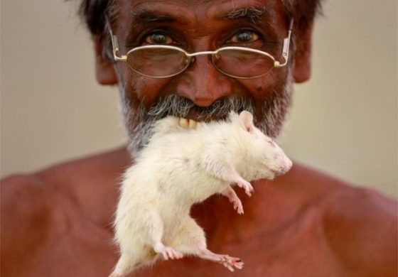 India: Farmers protesting with mice and human skulls