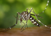 "Saint Lucia supports ""Caribbean Mosquito Awareness Week"""