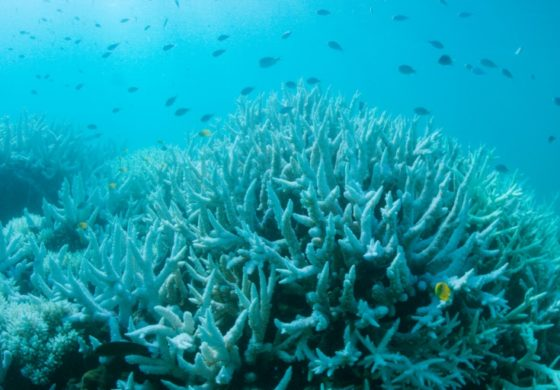 Global coral bleaching may be ending, US agency says