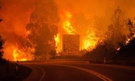 Portugal forest fires kill 57