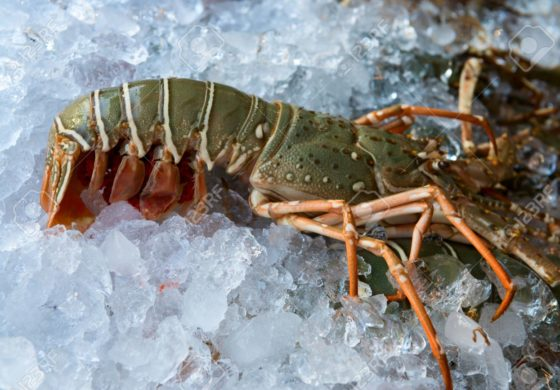 Italian court says lobsters must not catch cold before cooking