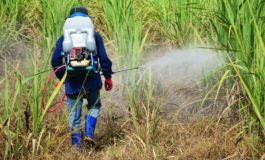 Occupational pesticide and herbicide exposure tied to lung disease