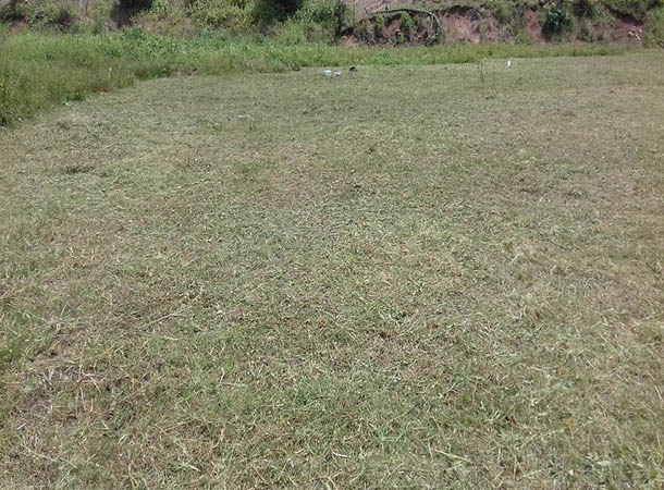 Playing Field Maintenance Project-After