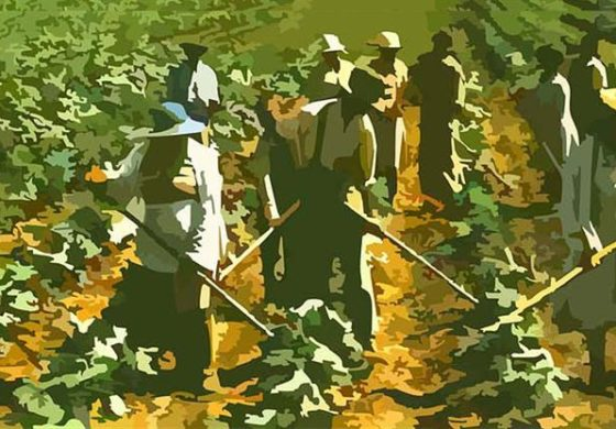 Protecting Saint Lucia's agriculture