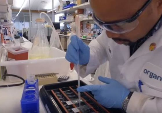 Caribbean researcher makes strides in biotechnology