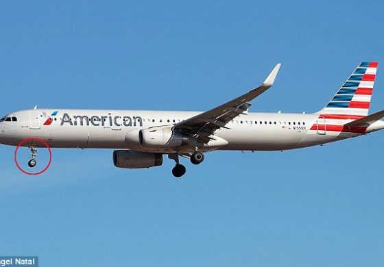 Dominican stowaway found on Miami flight