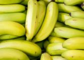 New project aims to improve banana production