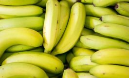 Banana exports increase