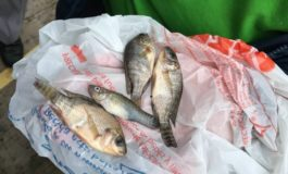Fish fall from sky with rain in northern Mexico