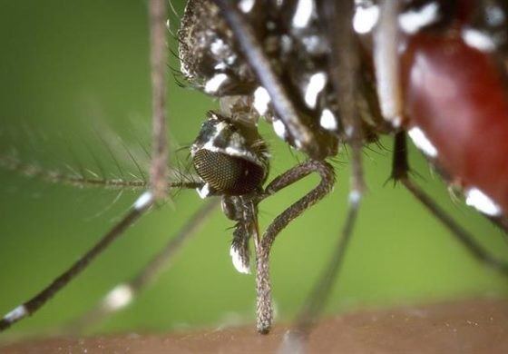 Jamaica reports one suspected dengue-related death