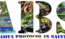 IUCN and UN Environment launch promotional videos on the Nagoya Protocol in Saint Lucia