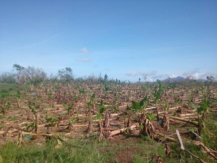 Restoration of immediate food production needed for Dominica's rural population as country tries to recover after the impact of Hurricane Maria