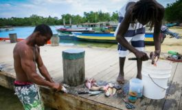 Fish galore as hurricanes push them into Jamaican waters
