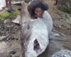 Soufriere fisherman makes huge catch - this is the big one, baby!