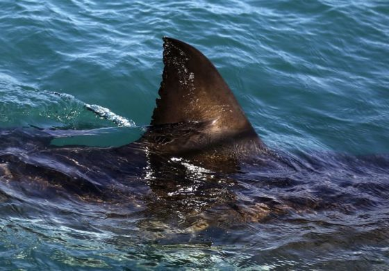 Teen kayaker says shark attack was like everything in 'Jaws'