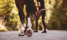 Woman charged with driving a horse while drunk