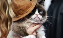 Grumpy Cat wins $710,000 payout in copyright dispute over use of image