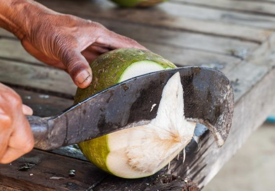 Coconut industry a main topic at Caribbean Week of Agriculture 2018