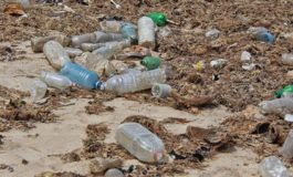 Cleanup campaign in Anse-La-Raye