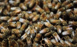 120,000 bees killed by 'mindless' vandals