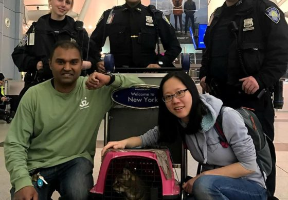 Elusive cat at Kennedy Airport finally caught
