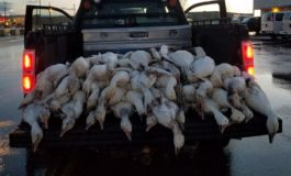More than 50 dead geese fall from Idaho sky in 'freak accident'
