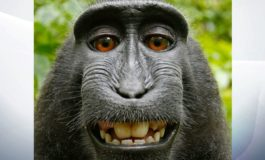 'Selfie' monkey Naruto cannot sue for copyright
