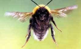 Guyana: Bees send mourners bolting from cemetery