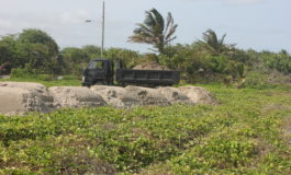 Sand Dune Restoration Works Continue in Vieux Fort