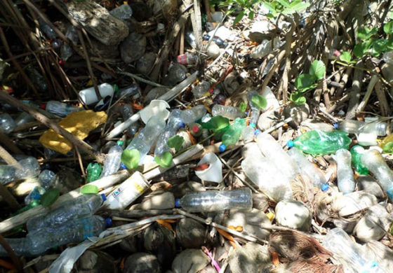 Department of Sustainable Development encourages public to minimize use of plastics as the world observes World Environment Day