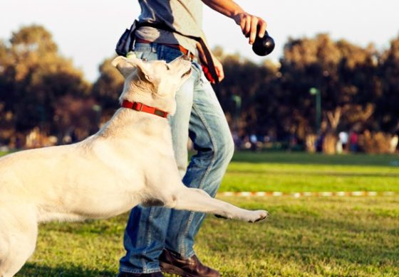 Jamaica: Vets want dog trainers certified
