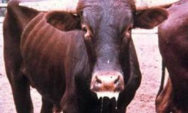 Guyana on high alert for foot and mouth disease