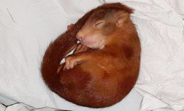 Germany: Police rescue man being chased by baby squirrel