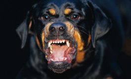 Jamaica: Another senior citizen attacked by dogs
