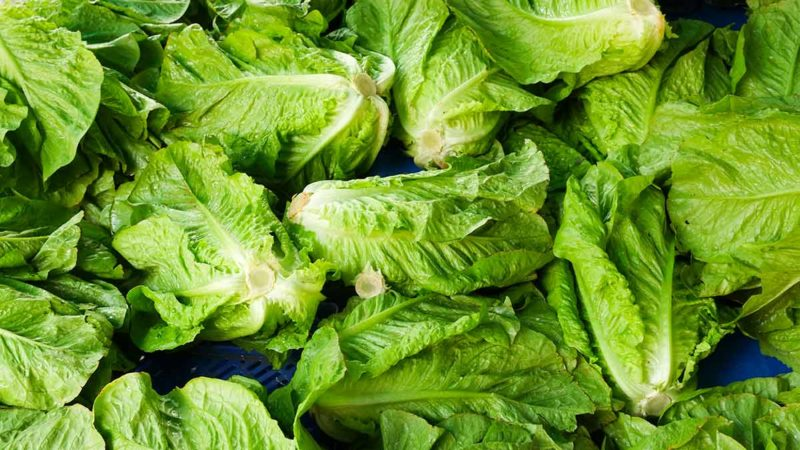 United States issues health alert on romaine lettuce