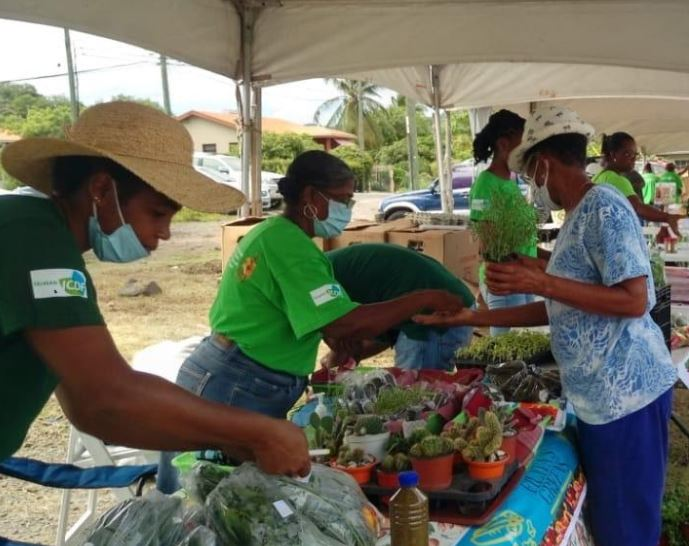Taiwan Technical Mission, Ministry of Agriculture Hold Farmer's Market
